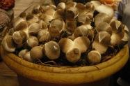jamur merang ditanam dalam pot1